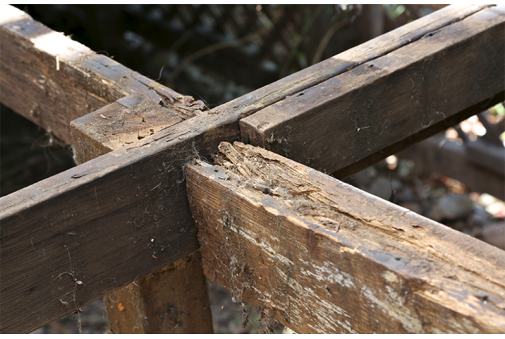 Dry and Wet Rot Treatment