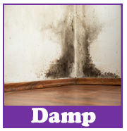 Rising Damp | House survey problems