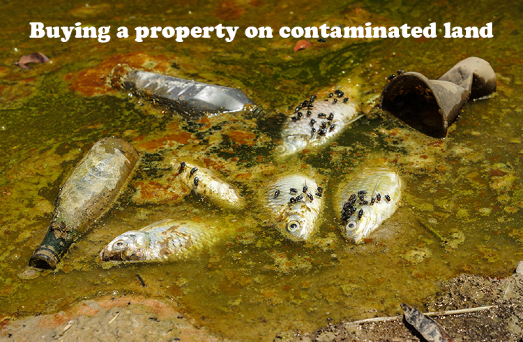 buying a property on contaminated land